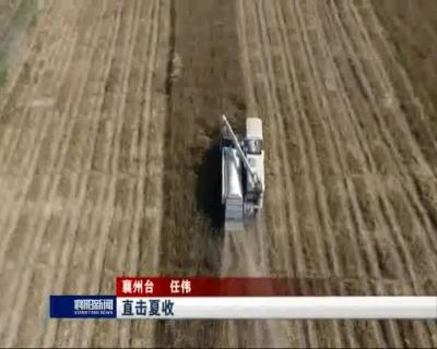 【V视】直击夏收