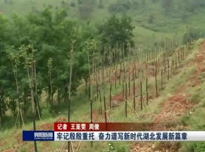 """【V视】推进国家储备林项目 建设""""绿色银行"""""""