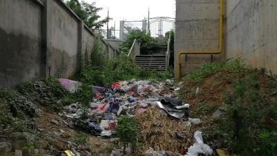 襄阳开展垃圾清除百日行动  近日回访却发现……
