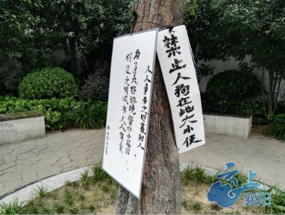 公园景观树上竟挂满垃圾牌  真相是......