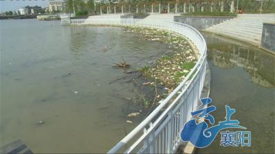 襄州浩然广场水面出现大量垃圾,怎么回事?
