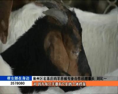 刘比一:兽医硕士当羊倌