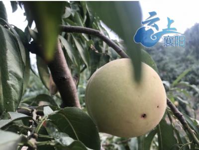 襄州:积极培育家庭农场 促农户增收致富