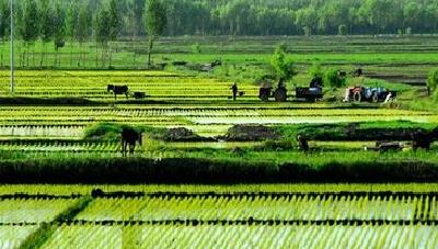 襄城农村集体产权制度改革有序推进