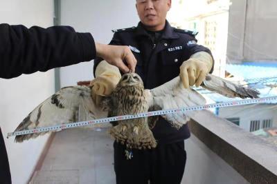 襄阳市森林公安局通报九起违法典型案例