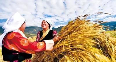28个省级乡村振兴规划已经印发实施
