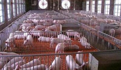 襄城区加大无序畜禽养殖污染整治力度