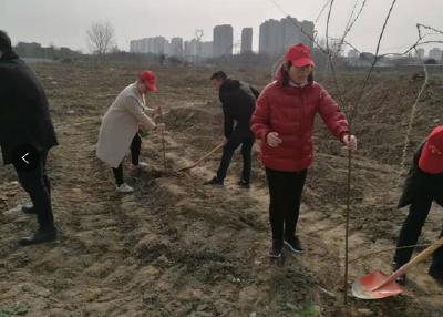 衡庄社区:志愿植树 让荒地变为绿地
