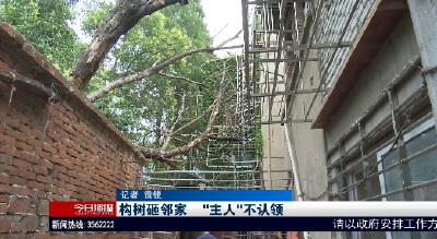 """构树砸邻家   """"主人""""不认领"""