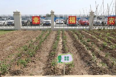 六化建襄阳东津新镇项目:幸福农场见证幸福项目