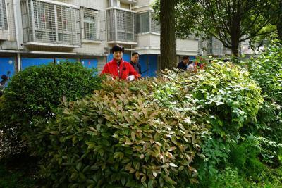 """襄阳市审计局组织开展""""清洁家园,美化环境""""志愿服务活动"""