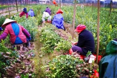 蕲春县林业局加强出圃苗木质量监管