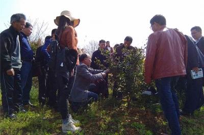 蕲春县林业局专家精准指导油茶管理技术