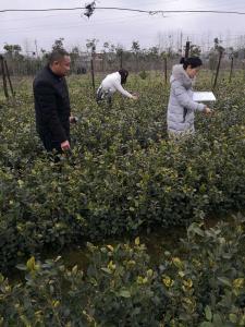 蕲春县森防站积极开展今春林木种苗产地检疫工作