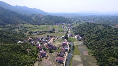 向桥乡枫树村:打造生态产业 建设美丽乡村