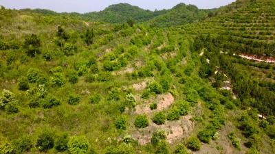 视频丨县林业局发展油茶产业 助力百姓增收