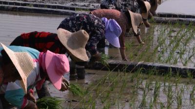 视频丨县农业农村局:多途并举力促粮食丰产增收