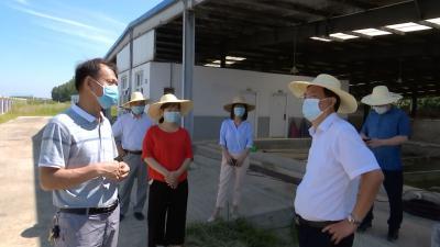 视频丨优化养殖模式 促进生态农业发展