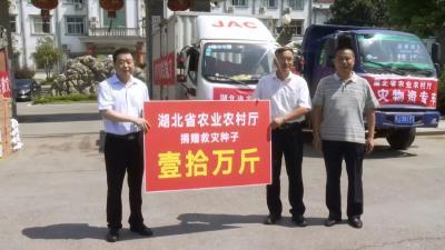 视频丨省农业农村厅捐赠10万斤种子 支援蕲春农业灾后生产自救