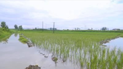 视频丨八里湖办事处积极开展农业生产自救