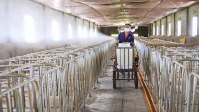 视频丨畜牧业积极开展生产自救
