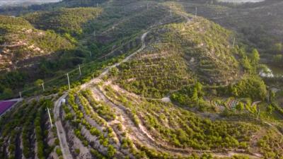 视频丨县林业局:让绿水青山变成金山银山