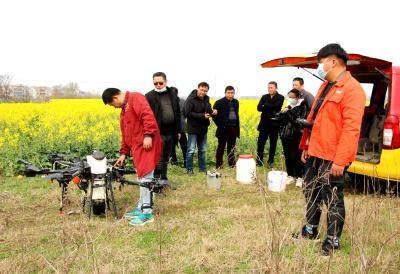 孝昌县花园镇用无人机喷洒农药 实施小麦和油菜病虫害防治