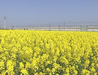 云梦   县农业农村局有序组织开展春季农业生产