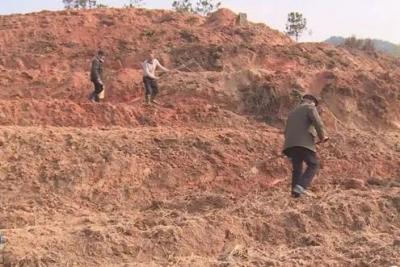 沙堆镇积极发展林下经济 助推贫困户脱贫