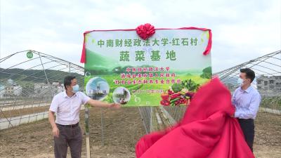 通城县麦市镇:蔬菜种植基地揭牌 校村联合助民增收