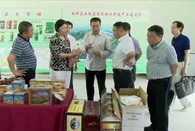 谭海华来通城调研茶叶产业发展工作
