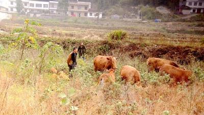 通城:贫困户发展生态养殖 走上幸福致富路