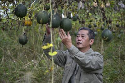 【决战决胜脱贫攻坚】陈敏:要给村里带来实实在在的变化