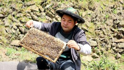【农业动态⑦】杨丁山:与大山相伴17年 80后小伙的养蜜事业