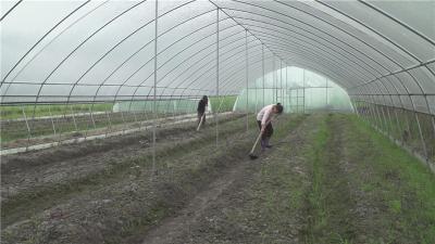 五里镇汉上村:特色产业带动农户增收