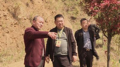 通城县人大常委会视察调研全域国土绿化工作