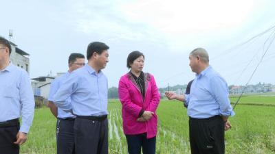 谭海华来通城调研农业产业发展和山洪灾害防治工作