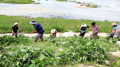 清理沿河菜地 隽水镇柳峦村整治村容村貌