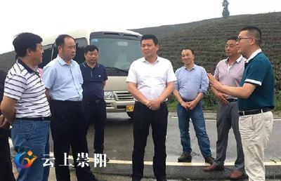 县委副书记程冰野调研青山茶叶小镇建设