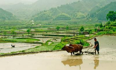 湖北无疫情村和乡镇,农民可以开始春耕啦!对于其他地方,湖北这样规定