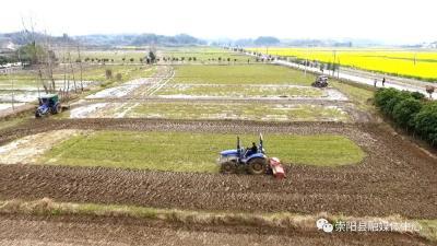 崇阳:防疫春耕两不误 农业生产正当时