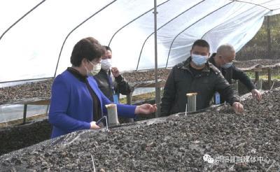 有困难我来帮!市农业农村局巡查组到崇阳县指导农业复工复产工作