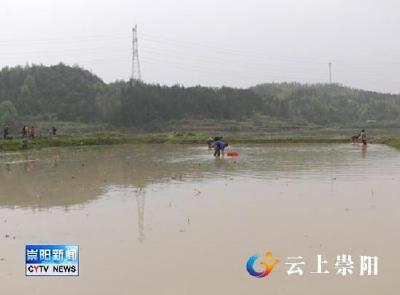 崇阳农业农村局:免费送种苗、技术下乡服务春耕生产