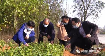杭莺:推进农业复工复产 迅速恢复生产秩序