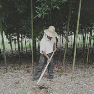 脱贫之星王维珠:发展雷竹产业  打赢脱贫翻身仗