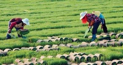 我省出台指导意见保农业生产