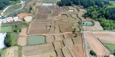 找准主攻方向 推动农业转型——以中药材为例探索崇阳县农业转型路径