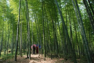 【崇阳美文】李专:一座林场的高度