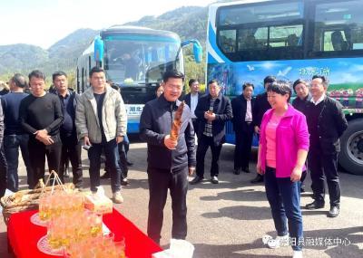 全市农村工作会议与会人员到崇阳县观摩