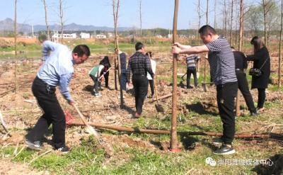 县水利局:种下一棵树 美化一条河